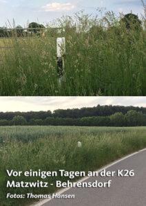 Grasschnitt-2016